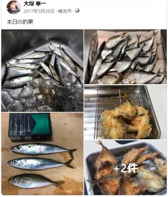 2017年5月 北条湾釣果