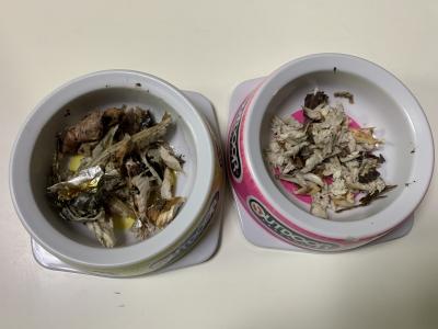 兄妹猫の朝食は釣りたての焼きサバのほぐし身