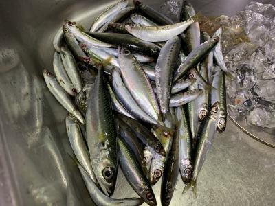 2020年8月23日 北条湾釣行 釣果