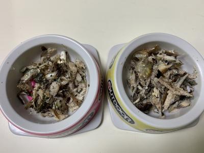 兄妹猫の朝食は釣りたてのマイワシ、ウルメイワシ、カタボシイワシを焼いたもの