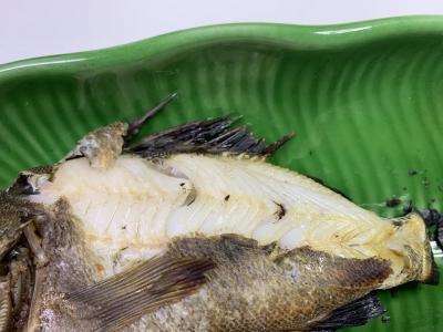 我が家の兄妹猫の朝食は釣りたてのメバルを焼いたもの