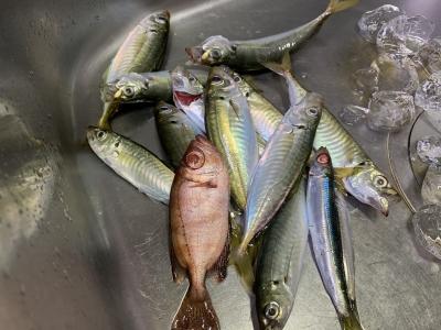 2020年10月11日 北条湾釣行 釣果