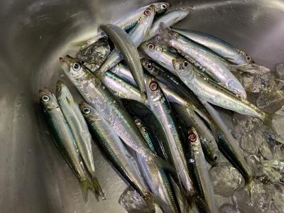 2020年10月18日 北条湾釣行 釣果