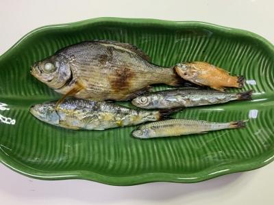 兄妹猫の朝食は釣りたての魚の五種盛り