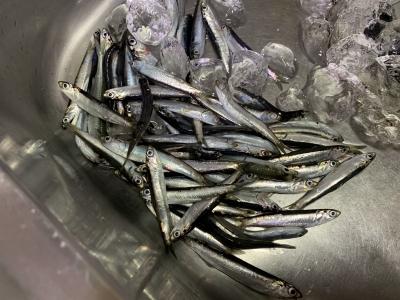 2021年4月4日 北条湾釣行 釣果