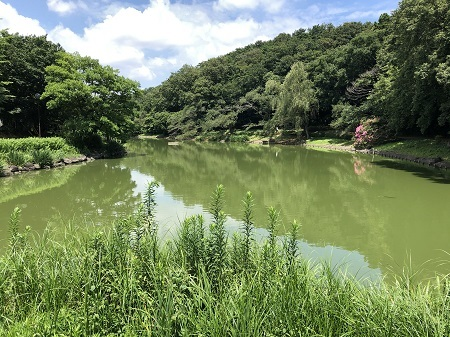 ichikawajunsai (5)