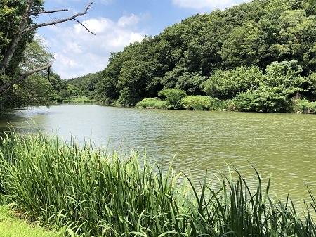 ichikawajunsai (9)