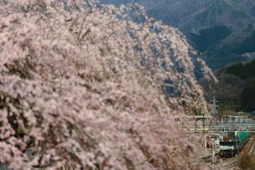 木曽の春はええなぁ