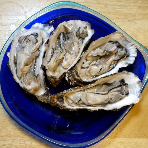 ふるさと納税2021 北海道 北見市 海のミルクサロマ湖産殻付2年物カキ貝 4kg (25~50個入) (2)