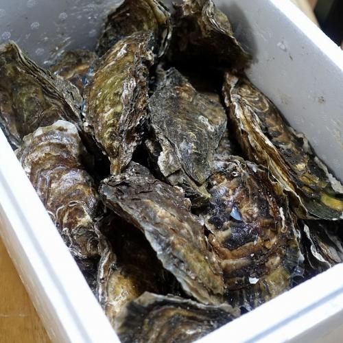ふるさと納税2021 北海道 北見市 海のミルクサロマ湖産殻付2年物カキ貝 4kg (25~50個入) (14)