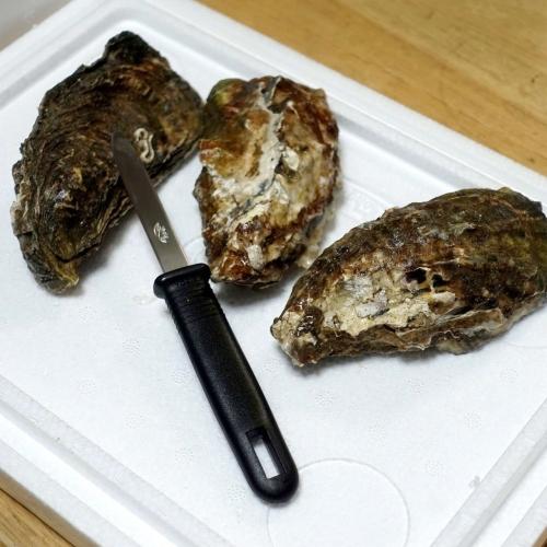 ふるさと納税2021 北海道 北見市 海のミルクサロマ湖産殻付2年物カキ貝 4kg (25~50個入) (17)