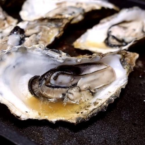 追加 海のミルクサロマ牡蠣 (3)