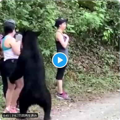 20200721小熊がハグ