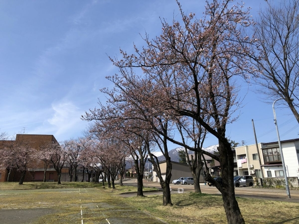 2020-03-31文化ホール1