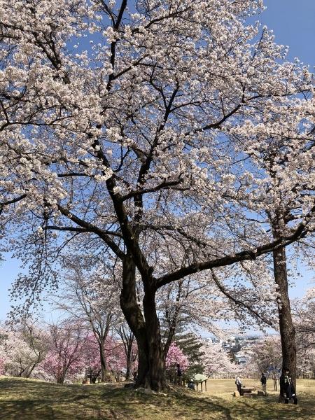2020-04-04 経塚山3