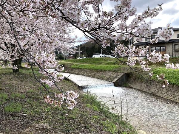 2020-04-05神宮寺2