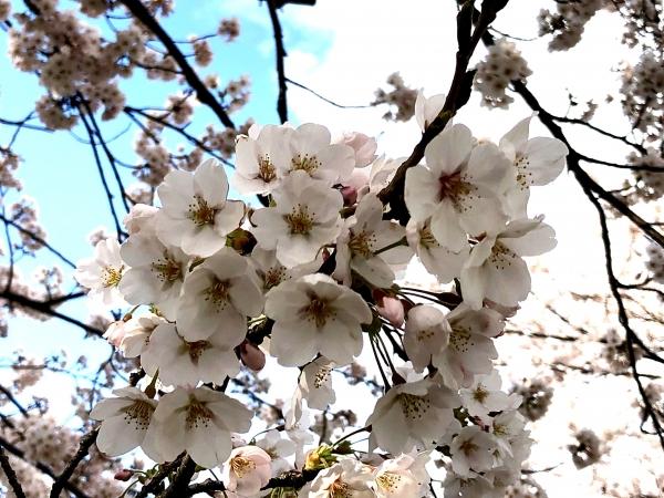 2020-04-05神宮寺3