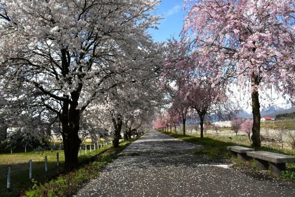 2020-04-11 矢代川1