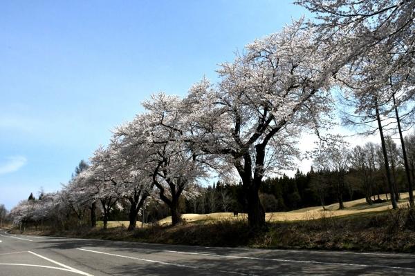 2020-04-12松ヶ峯4
