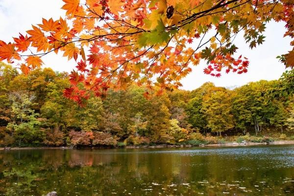 笹ヶ峰仙人池2