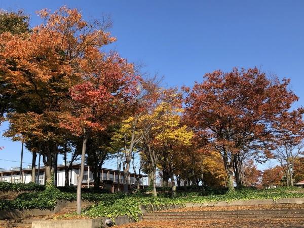 文化ホール紅葉