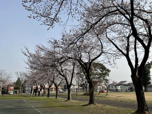 文化ホール桜1