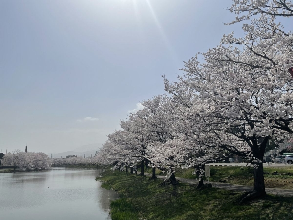 高田城址公園1