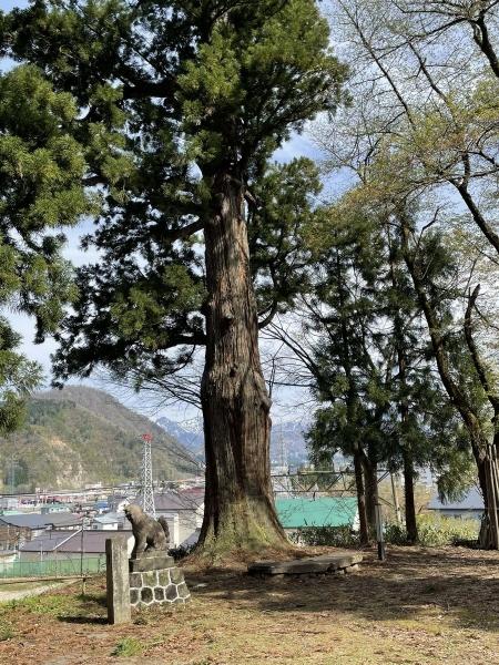 諏訪社御神木