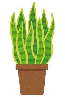 plant_sansevieria0630.jpg
