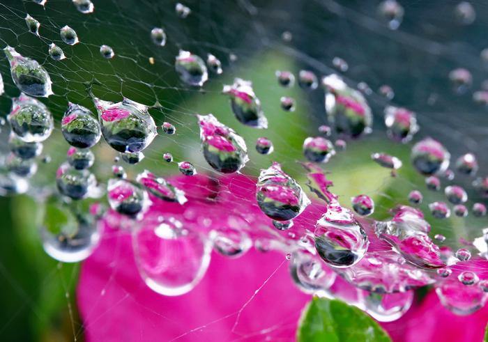 蜘蛛の糸と雨滴