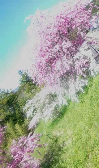 20200406_kakegawa_002.jpg