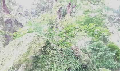 20200624_awantake_awawa_032.jpg