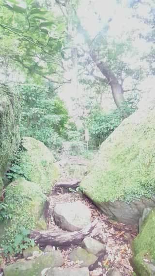 20200624_awantake_awawa_033.jpg