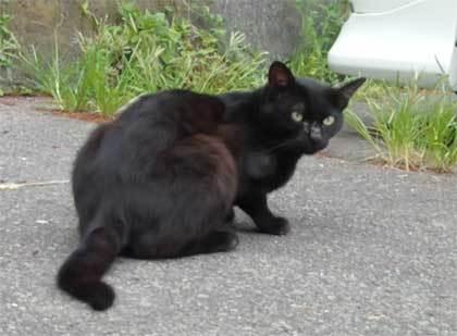 20200625_surugaku_cat_007.jpg