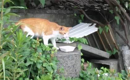 20200625_surugaku_cat_009.jpg