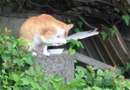 20200625_surugaku_cat_010.jpg
