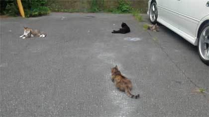 20200625_surugaku_cat_013.jpg
