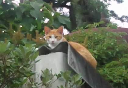20200625_surugaku_cat_014.jpg