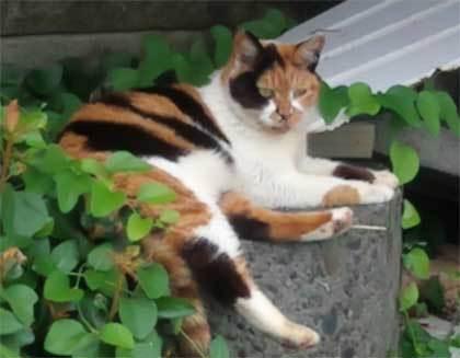 20200625_surugaku_cat_015.jpg