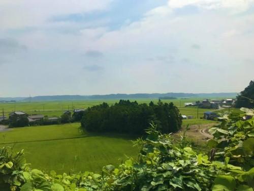 桃源郷のような畑3