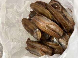 オオミゾ貝