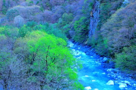 芽吹き始めた若葉の森と小渋川の谷