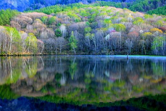 湖面に映える萌える若葉の森