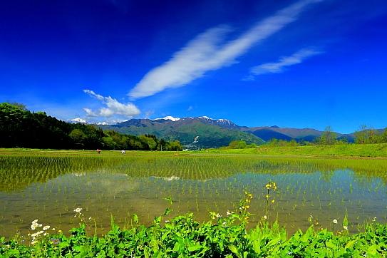 伊那市富県の水田地帯と青空の雲