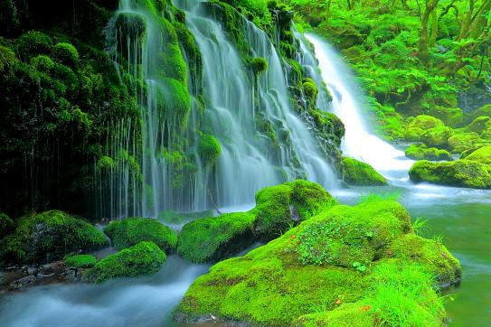 緑色鮮やかな緑苔覆う元滝