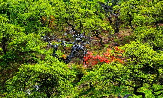 萌える若葉をまとうしだれ栗と花咲くツツジ