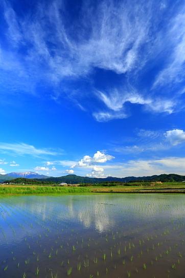 六道の水田地帯を彩る高層雲