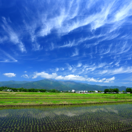 伊那市西箕輪の水田地帯を彩る高層雲