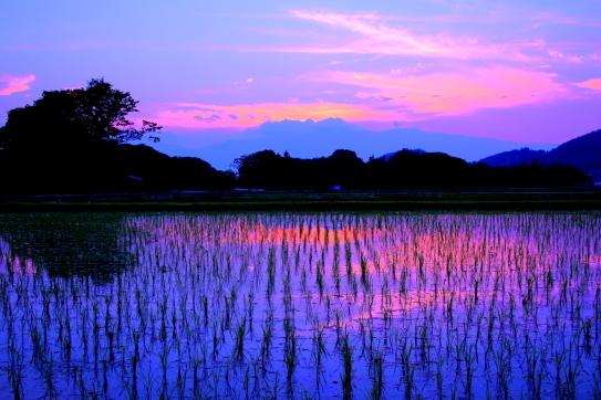 夕映えの高遠の水田地帯
