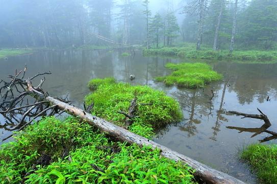 霧に煙る八ヶ岳茶水池